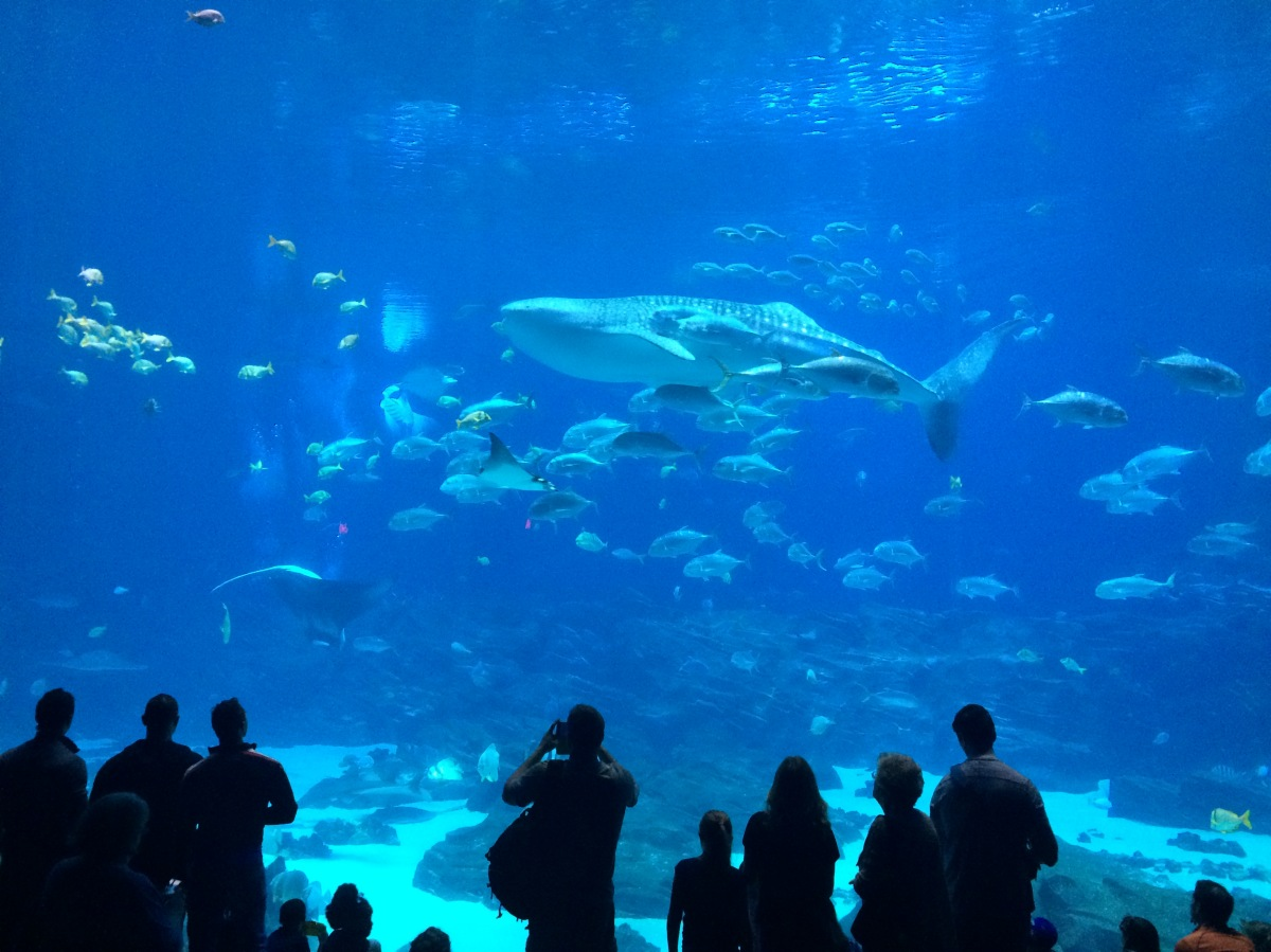 Exploring the largest aquarium in the Western Hemisphere
