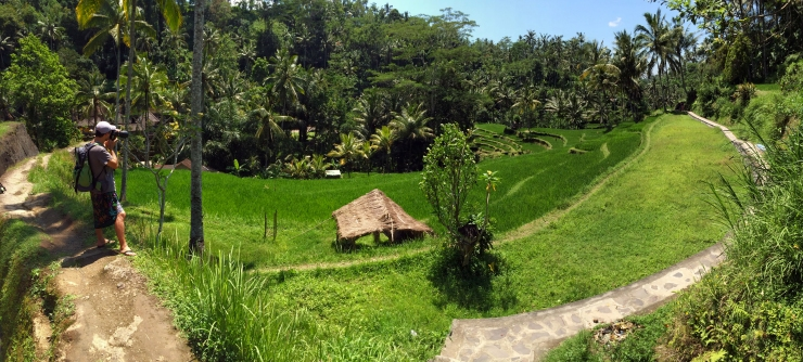 Gunung Kawi Rice Terraces Panorama.JPG