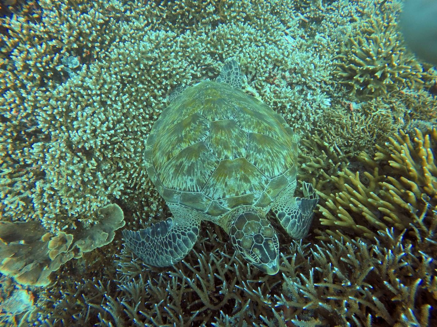Travelosio Turtle Dive.jpg