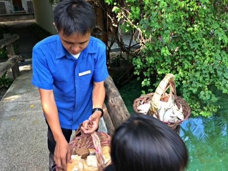 bluewater-maribago-shark-feeding