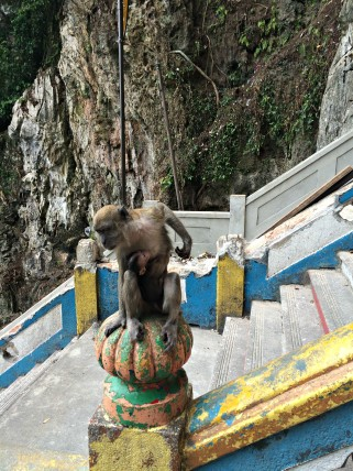 Batu Caves monkey