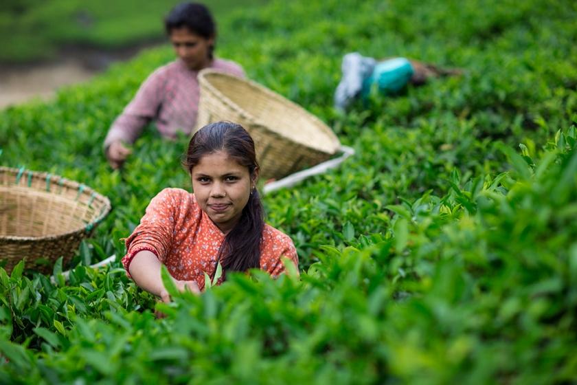 India tea.jpg