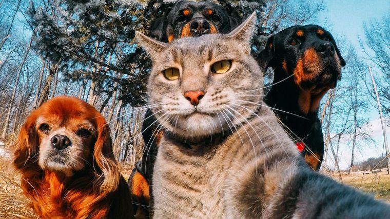 Animals Selfie.jpg