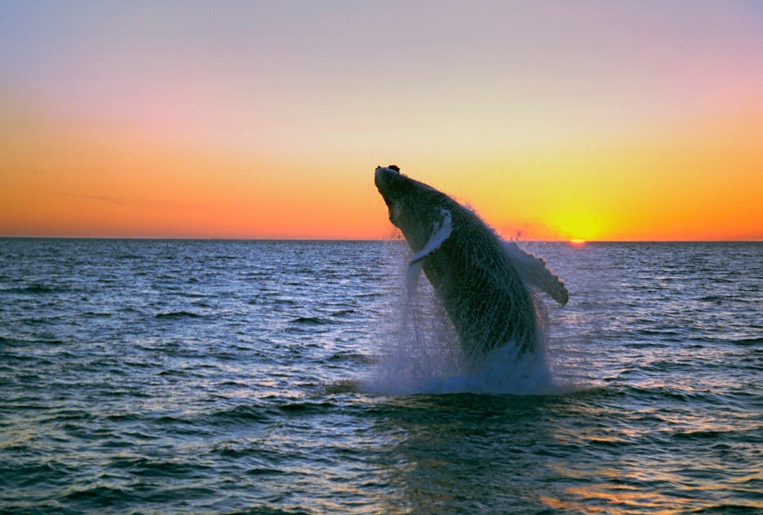 humpback-midnight-jump-fixed.jpg